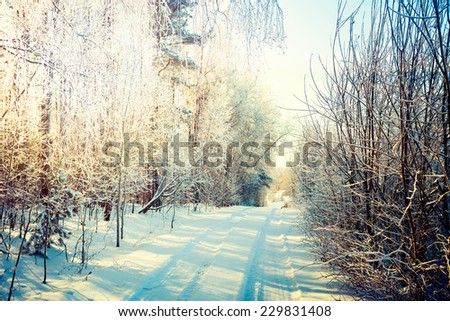 Winter Landscape. Snowy Road in Forest. Toned Photo. - stock photo