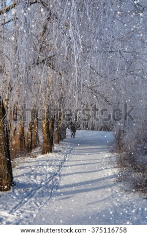 winter landscape. sunny morning. snowy road in the park, the beach in the morning sun. frost crystals sparkle on the branches. wonderful winter scene - stock photo
