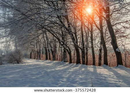 winter landscape. sunny morning. snowy road in the park, the beach in the morning sun. wonderful winter scene. color in nature