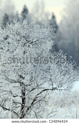 winter landscape, the trees and the grass covered with frost, winter outside - stock photo