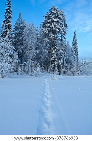 Winter landscape.Trail in the snow