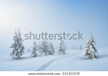 Winter landscape. Trail in the snowy forest. Carpathian mountains, Ukraine, Europe. Christmas landscape - stock photo
