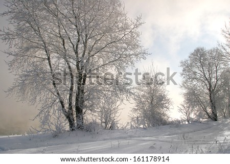 winter landscape trees covered with frost on a misty morning