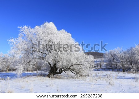 Winter landscape trees in frost in a snowy field in the early frosty morning - stock photo