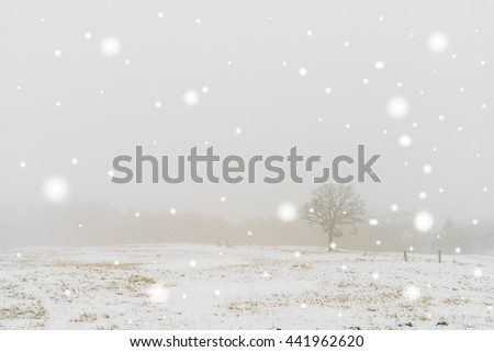 Winter Landscape  trees on snow - stock photo
