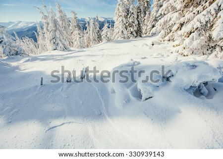 winter landscape trees snowbound
