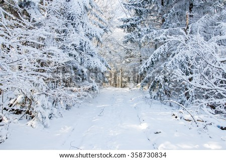 Winter landscape. Winter road in covered snow forest - stock photo