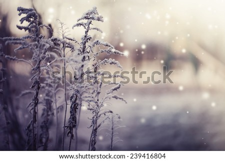 Winter landscape.Winter scene .Frozen flower - stock photo
