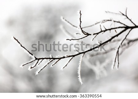Winter landscape.Winter scene. Frozen plants.