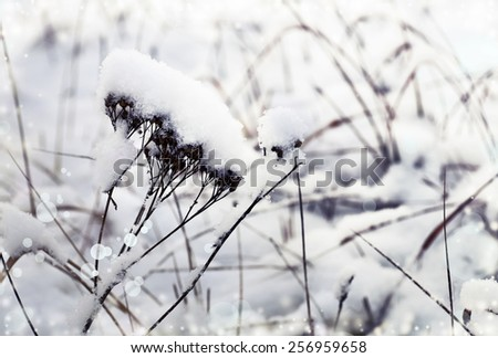Winter landscape.Winter scene .Frozen weed flowers covered with snow - stock photo