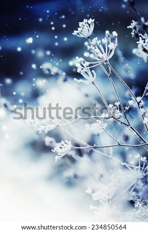Winter landscape.Winter scene . Frozenned flower  - stock photo