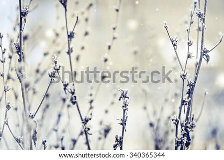 Winter landscape.Winter scene .Frozenned flower - stock photo