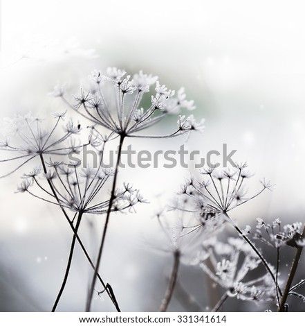 Winter landscape.Winter scene .Frozenned flower/ selective focus - stock photo