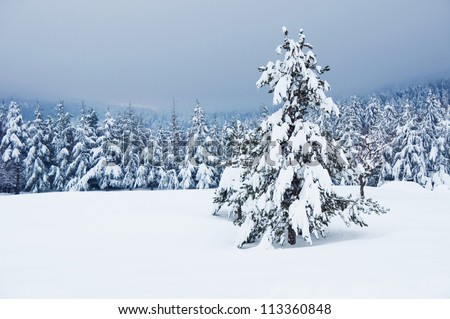 Winter landscape with a christmas tree - stock photo