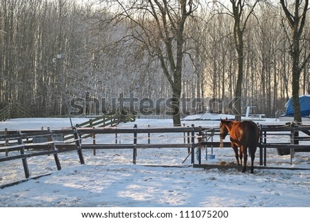 Winter landscape with a horse in The Netherlands. - stock photo