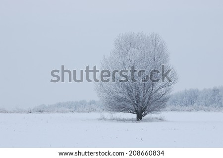 Winter landscape with a lone tree in a field. Cloudy weather  - stock photo