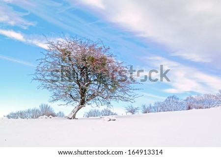 winter landscape with a solitary tree