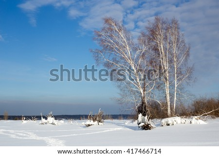 Winter landscape with birches against blue sky in Russia - stock photo