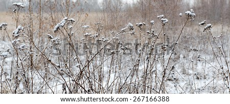 winter landscape with falling snow. Fog background, Wild flowers and dry grass covered with snow - stock photo