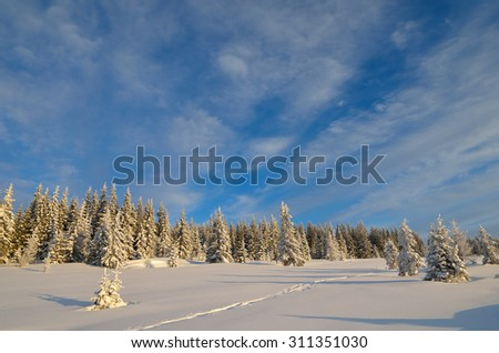 Winter landscape with fir forest and the path in the snow. Christmas view - stock photo