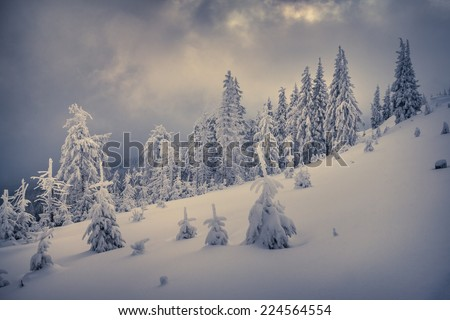 Winter landscape with fir-trees and fresh snow. Retro style.