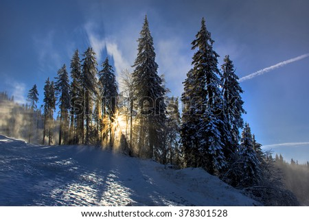 Winter landscape with fir trees forest covered by heavy snow in Postavaru mountain, Poiana Brasov resort, Romania. - stock photo