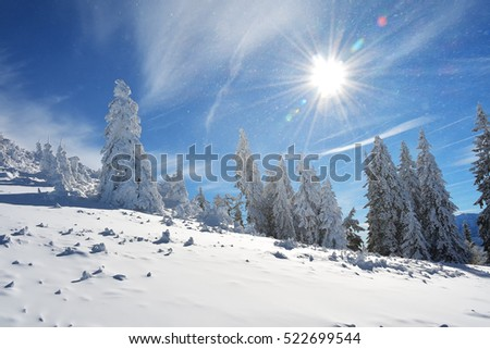 Winter landscape with fir trees forest covered by heavy snow in Postavaru mountain, Poiana Brasov resort, Romania
