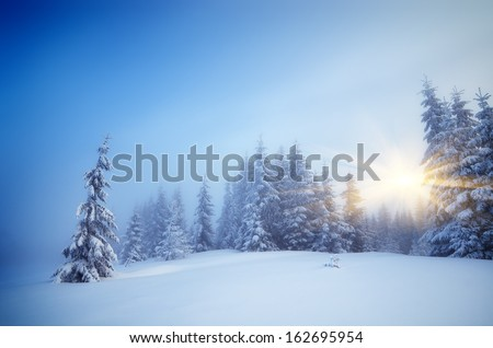 Winter landscape with fog in a mountain forest. Evening with the warm rays of the sun