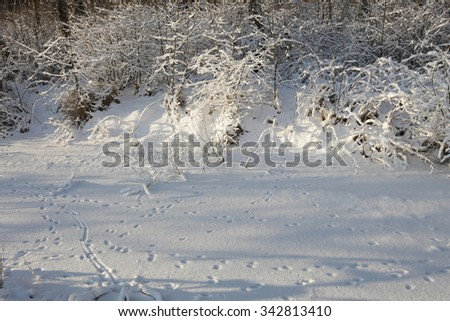 Winter landscape with footprints in a snow