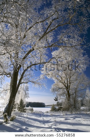 Winter landscape with frosted trees 6 - stock photo