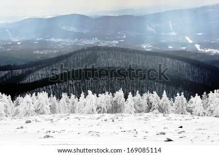 winter landscape with frozen pines - stock photo
