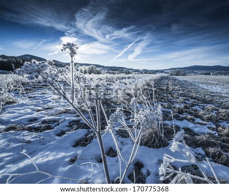 winter landscape with frozen plants - stock photo