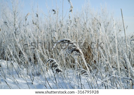 Winter landscape with frozen plants in the field- focus at the central plant, tonal processing - stock photo