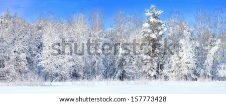 Winter landscape with frozen trees - stock photo