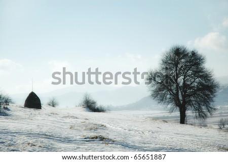 Winter landscape with frozen vegetation - stock photo