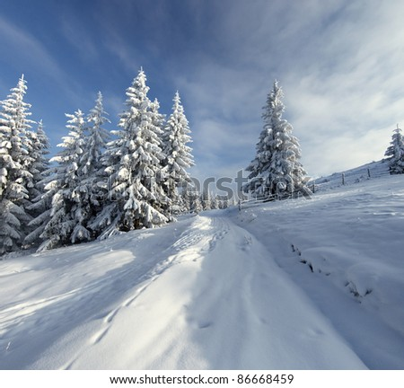 Winter landscape with fur-trees and fresh snow. Ukraine, Carpathians - stock photo