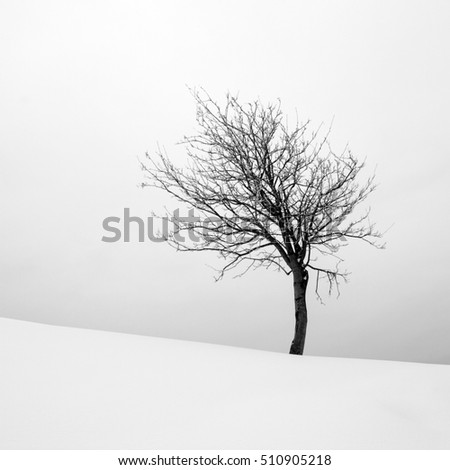 Winter Landscape With Lonely Tree