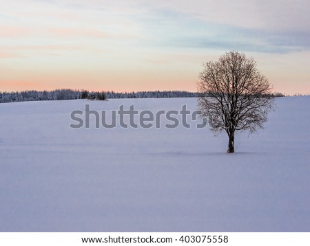 Winter landscape with lonely tree and snow field, sunset sky - stock photo