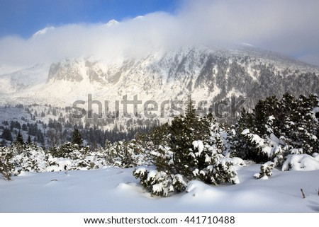 winter landscape with pine over valley in Tatra Mountains