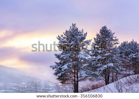 Winter landscape with pine trees covered with snow at sunset. - stock photo