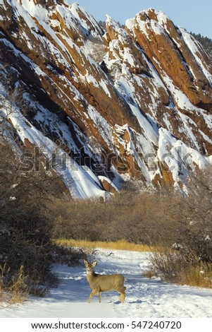 Winter landscape with red rock formations and deer at Roxborough State Park in suburban Denver, Colorado -