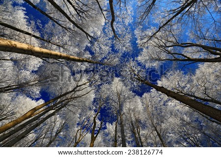 Winter landscape with rime treetop and dark blue sky - stock photo