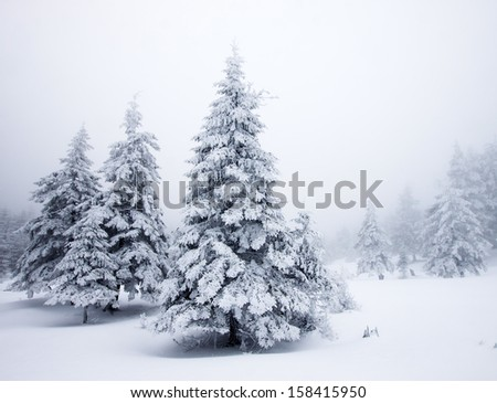 Winter landscape with snow covered firs