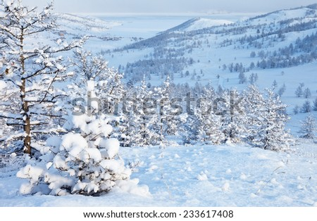 Winter landscape with snow-covered larch - stock photo