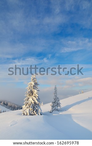 Winter landscape with snow-covered trees in a mountain valley. Ukraine, Carpathians - stock photo