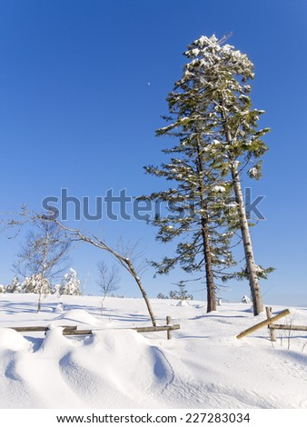 winter landscape with snow covered trees, wooden fence and clear blue sky  - stock photo