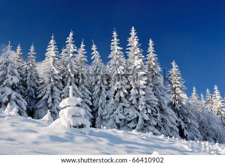 Winter landscape with snow in mountains Carpathians, Ukraine - stock photo