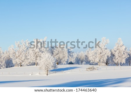 Winter landscape with snow on the trees - stock photo