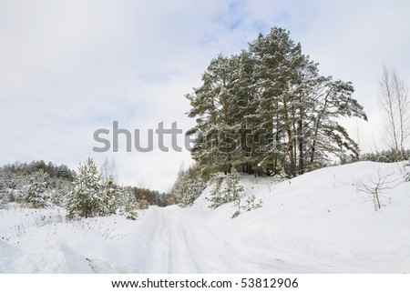 Winter landscape with snow, road and pines.