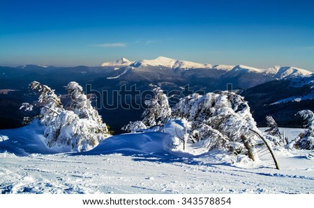 Winter landscape with snowy alpine pine and  ski trails in the foreground. - stock photo
